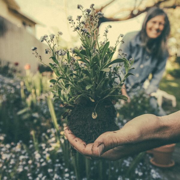 Gardening for older people has multiple benefits, both physically and mentally.